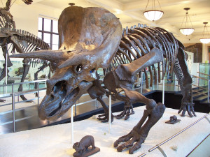TriceratopsAM