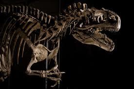 allosaurus 4