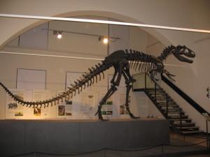 allosaurus 5