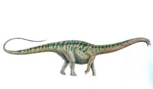apatosaurus 4