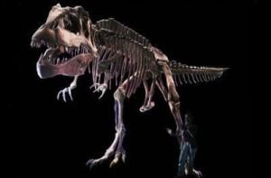 carnotaurus 3