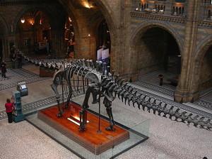 nhm-diplodocus