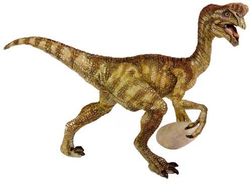 Oviraptor - Fotos, Hechos y Historia