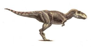 Tarbosaurus (1)