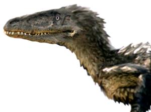 Utahraptor 3