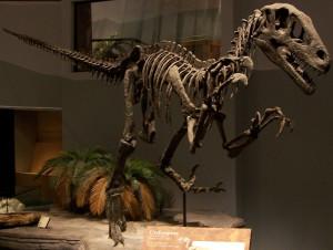 Utahraptor_skeleton_NAMAL