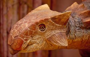 ankylosaurus-470_73367_1