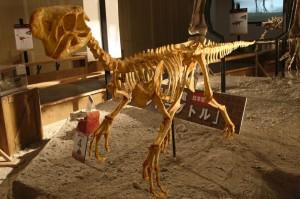 oviraptor-skeleton-1024x682