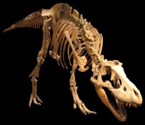 tarbosaurus1
