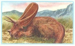 #67 Torosaurus