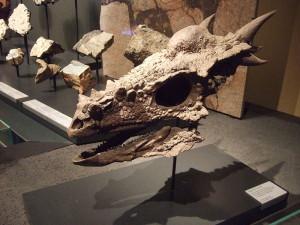 800px-Museum_für_Naturkunde_Berlin._Fossil_Stygimoloch_spinifer_001