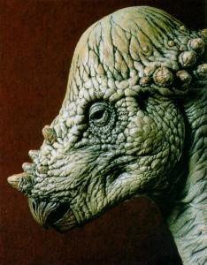 Pachycephalosaurus-animals.timduru.org_