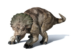 Protoceratops (1)
