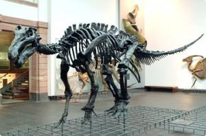 iguanodon (1)