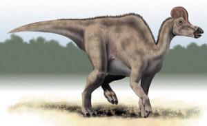 Corythosaurus (2)
