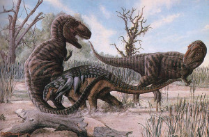 Daspletosaurus-twoguysfossils