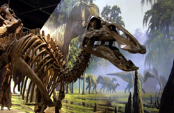Maiasaur2