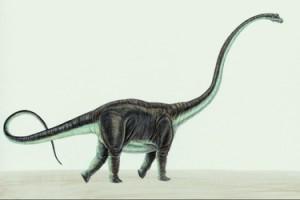 Mamenchisaurus-10496