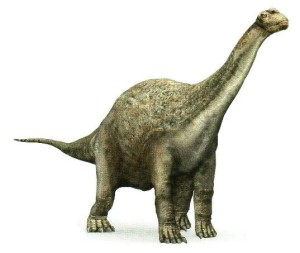camarasaurus_43792