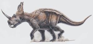 centrosaurus_01